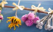 干花制作常用花材有哪些种类